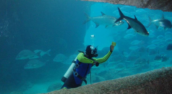 Paradise Island Aquarium