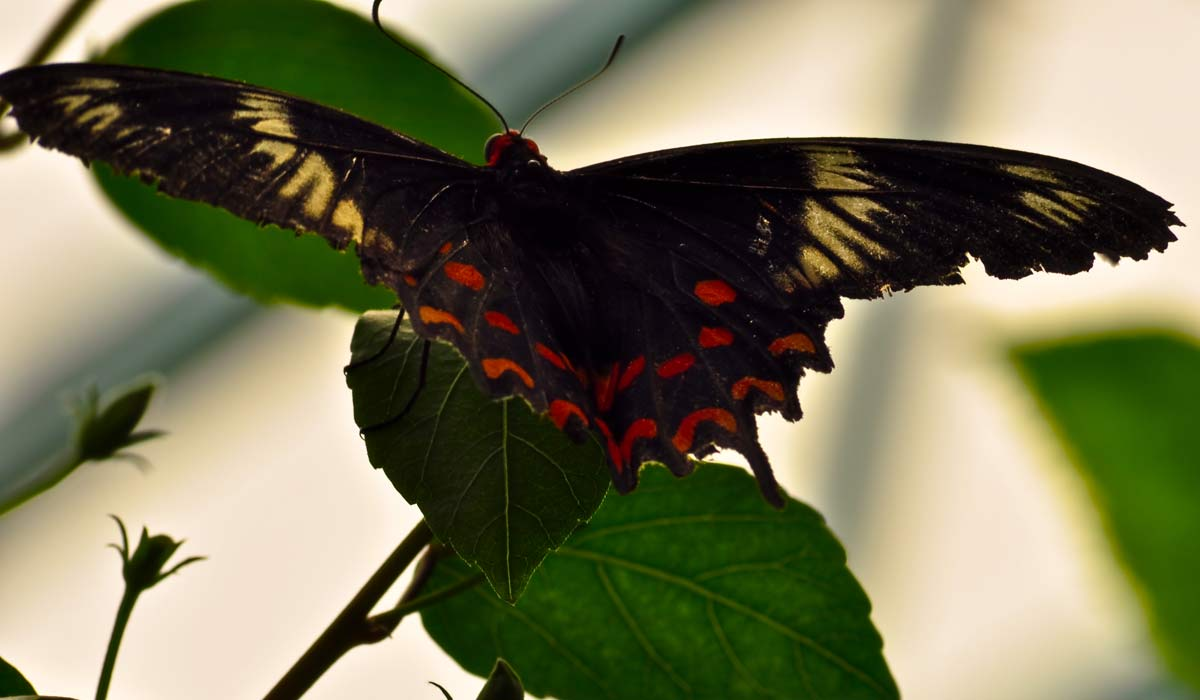 Butterfly-Park