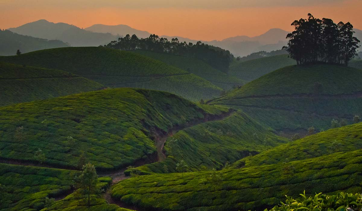 Top Station Echo Point in Munnar