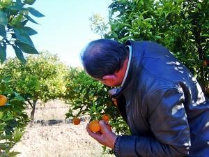 Români prinși la furt de portocale la Villarreal