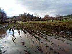 Andalucia: Ploaia le strică românilor toate socotelile