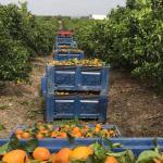 Muncitori români infectați la o fermă din Ávila