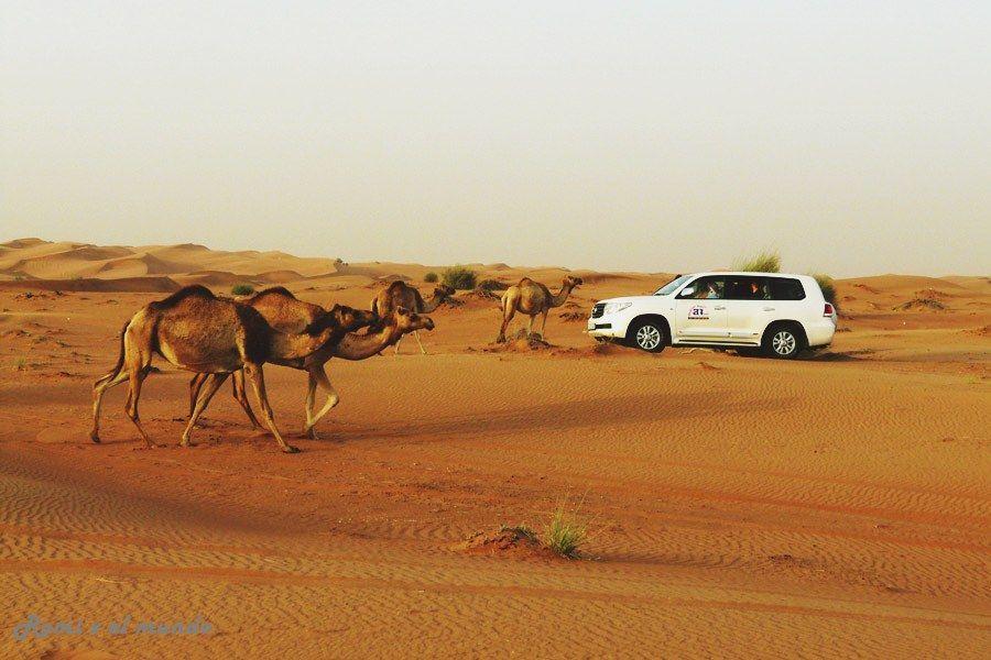 Safari Dubai