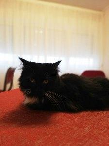gatto sul sofà