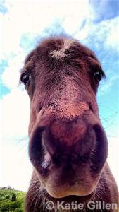 grayson highlands ponies, southwest virginia hike