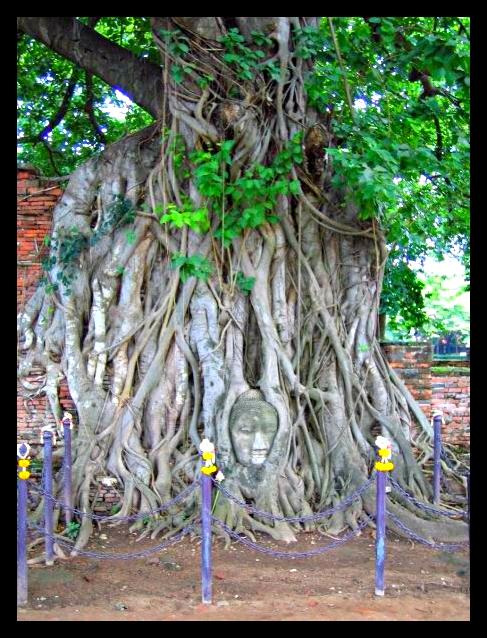 ayutthaya buddha