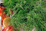 Photo of A mágikus kapor ,antimikrobiális hatása vetekszik a fokhagymáéval