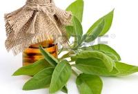 Photo of Az orvosi zsálya + egy stift dezodor recept