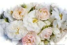 Photo of Alba Rózsa (fehér rózsa) használata receptekkel