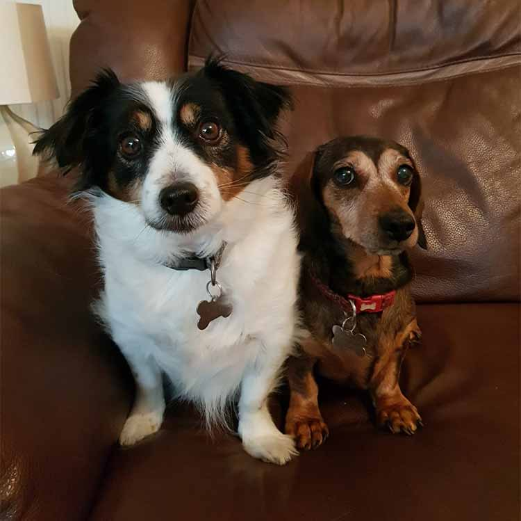 Pippa & Millie - Original Photo