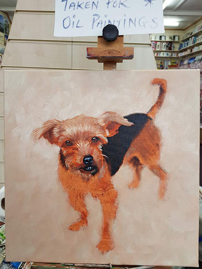 Pippin - Progress - Pet Portrait