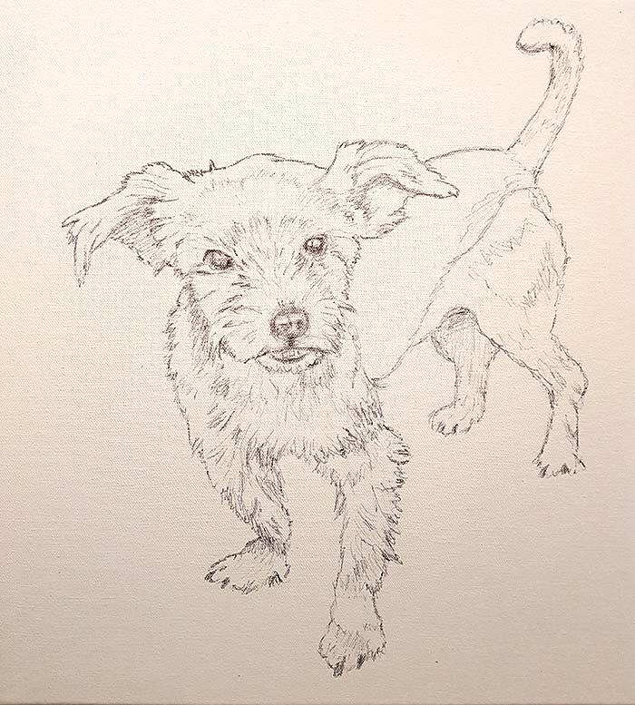 Pippin - Sketch - Pet Portrait