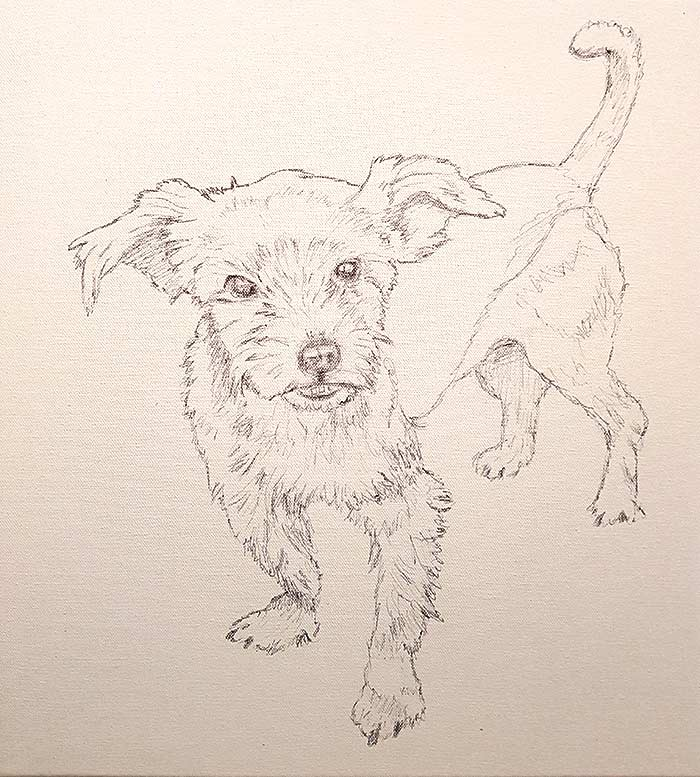 Pippin - Sketch - Pet Portrait