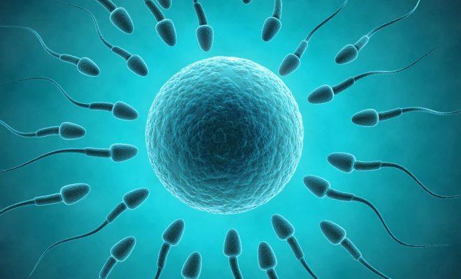 fecundacion-ovulo