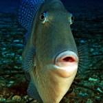 03. ALBERTO GALLUCCI - Compact FISH
