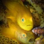 03. JIM CHEN - DSLR FISH