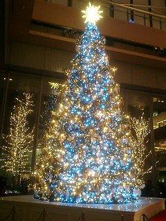 もちろんクリスマスツリーはきれいだけど
