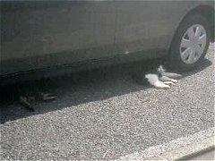猫も暑そう