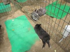 なぜかウサギとカメが一緒にいる