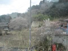 梅の花?が咲いていた