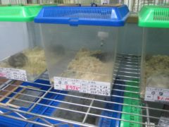 入店日にきょろ出合う(2014-09.-03)