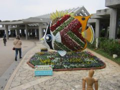 沖縄美ら海水族館へ