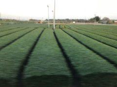 茶畑が広がる…