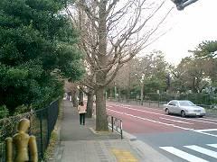 青山霊園を歩く
