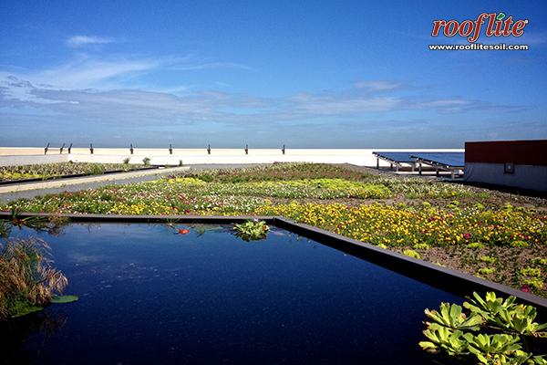 Caurtel de Ballaja Green Roof - rooflite