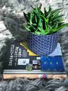Instastyle book review sheepskin succulent