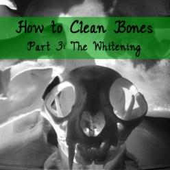 how to clean bones tutorial part 3