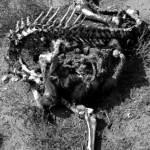 finding a horse skeleton