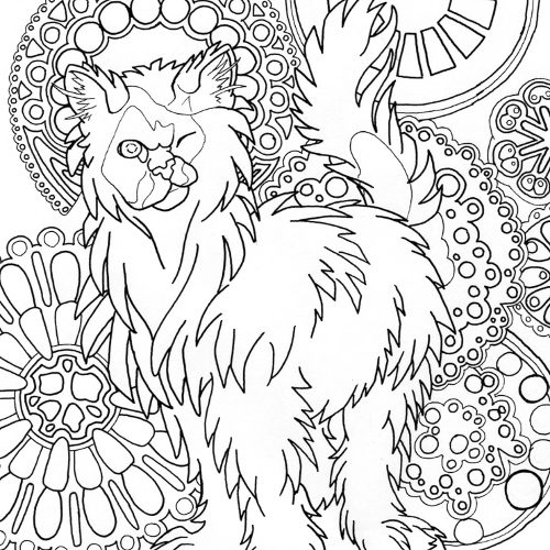 himilayan cat coloring page