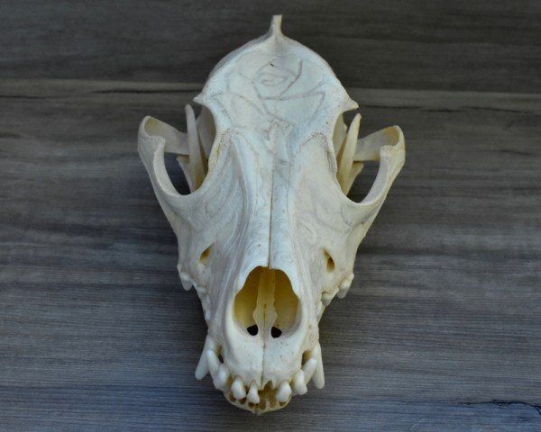 Dog Skull With Rose Engraving