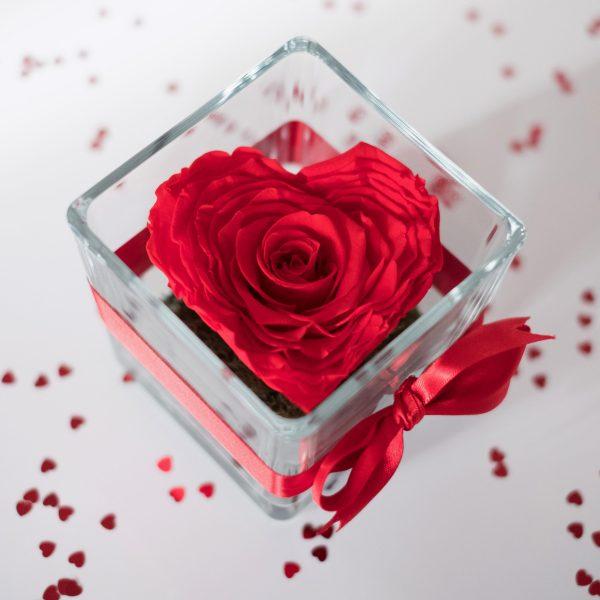 rosa rossa a forma di cuore stabilizzata in contenitore di vetro con nastro rosso