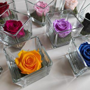 rose di tutti i colori in cubi di vetro su tavolo