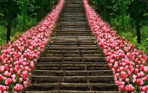 Stairway_to_Heavon_Flower_Tulips_ Kyoto_Japan