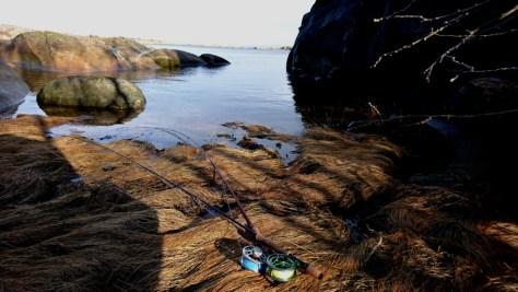 Fluefiske Hvaler