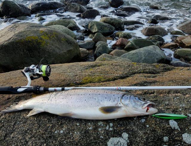 Fiske sjøørret om vinteren.