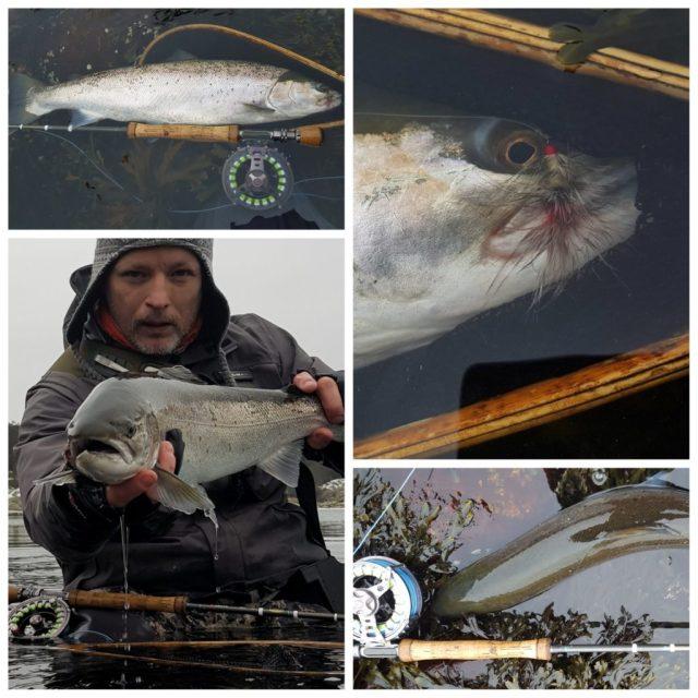 Sjøørret fiske på Hvaler.