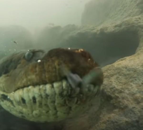 Un reptil así puede llegar a medir más de seis metros de largo.