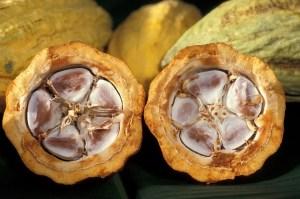 cabosse et fèves de cacao