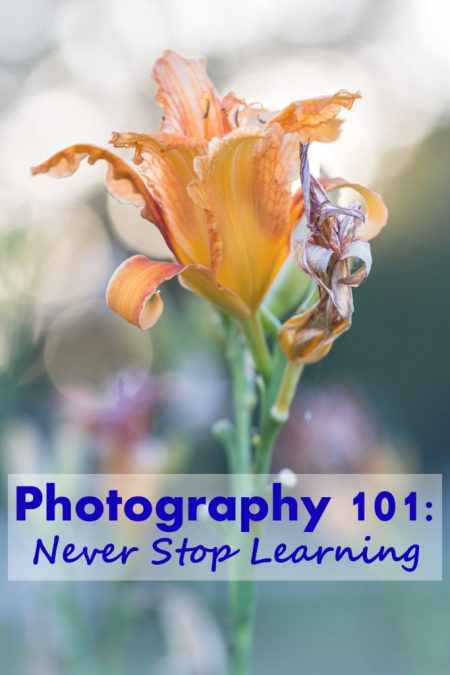 Photography 101: Never Stop Learning - Making an effort to learn new technical, composition, and editing techniques on a regular basis is key to staying current in the field and continuing to improve your skills as a photographer.   https://www.roseclearfield.com