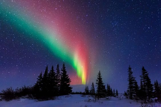 Aurora Over the Trees of Churchill Manitoba by David Marx | http://www.roseclearfield.com