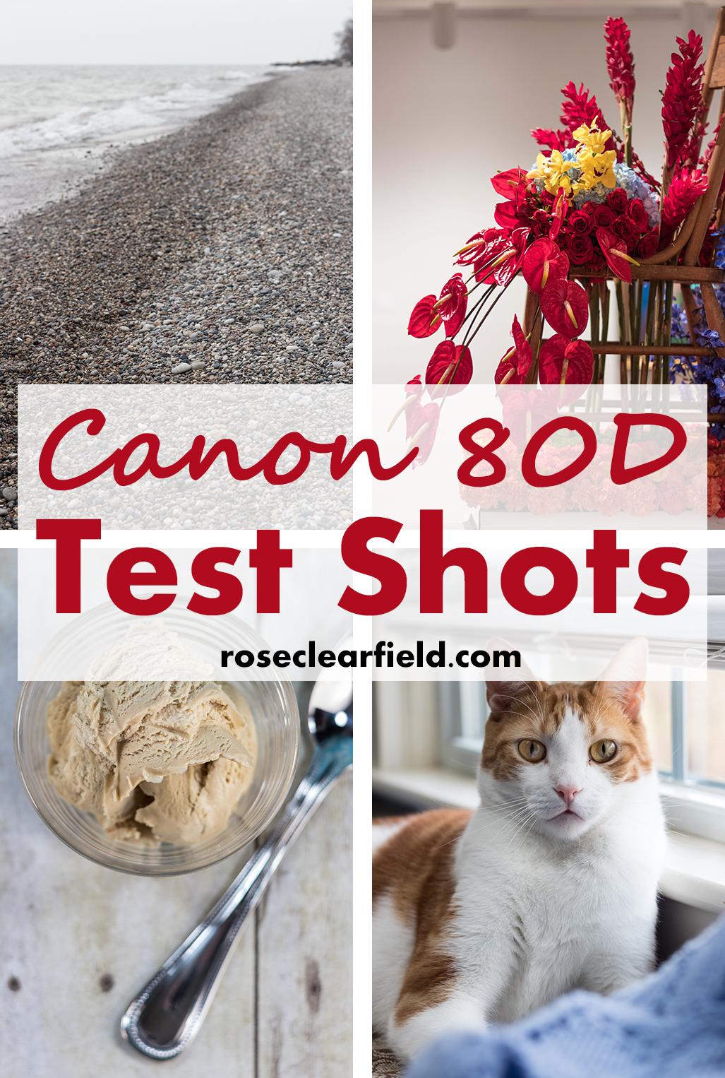 Canon 80D Test Shots   https://www.roseclearfield.com