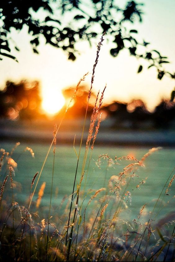Memorial Day Inspiration - Golden Hour via Reiss Women's Fashion Blog | http://www.roseclearfield.com