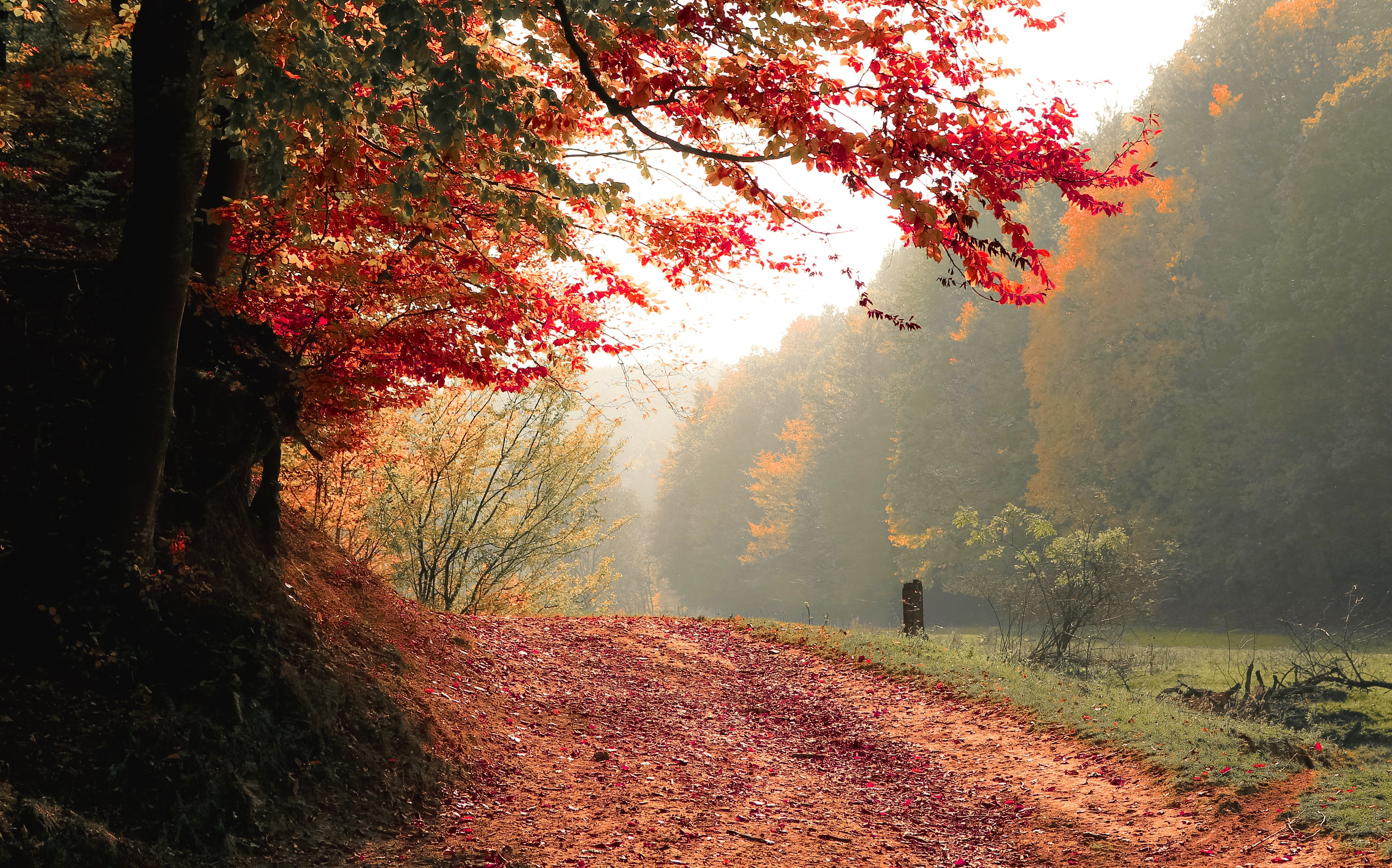 20 Creative Fall Photography Ideas - Daylight Autumn Fall by Vali S. via Pexels | https://www.roseclearfield.com