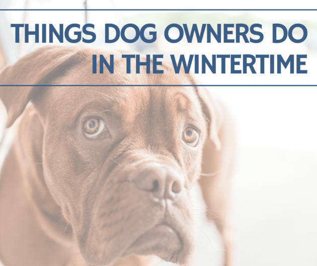 Things Dog Owners Do in the Wintertime