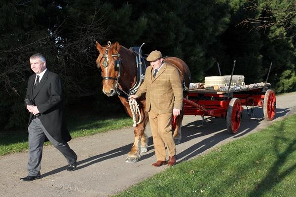 Heavy horses funeral transportation