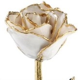 24K Gold Dipped Rose